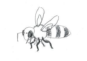 ミツバチの絵